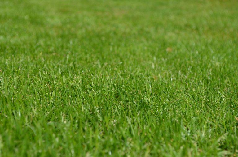 Odpowiednie nawożenie przynosi korzyści trawnikom