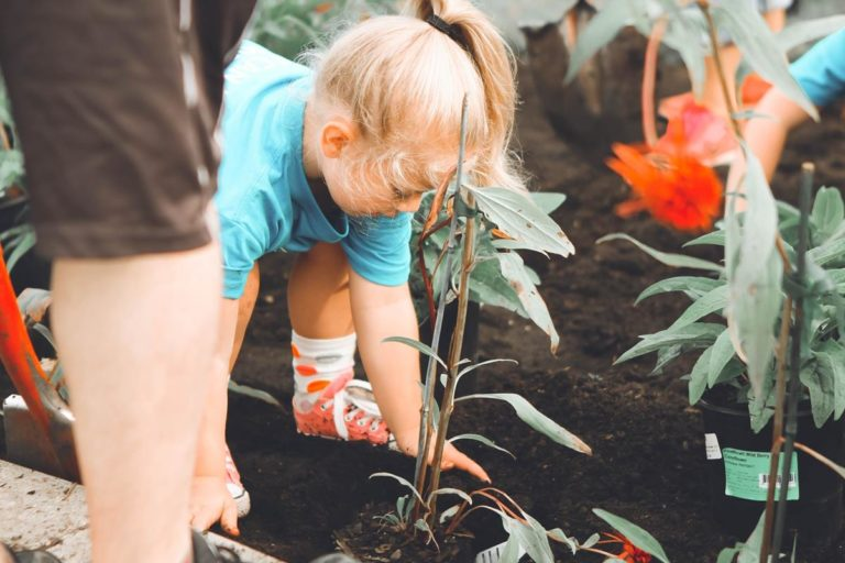 Wybranie odpowiednich roślin ogrodowych