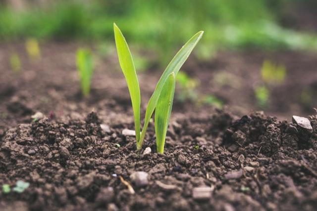 Chwasty i ich zły wpływ na uprawy rolne